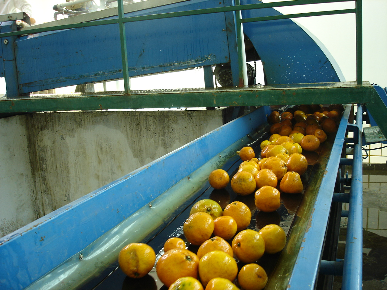 Línea de procesamiento de fruta