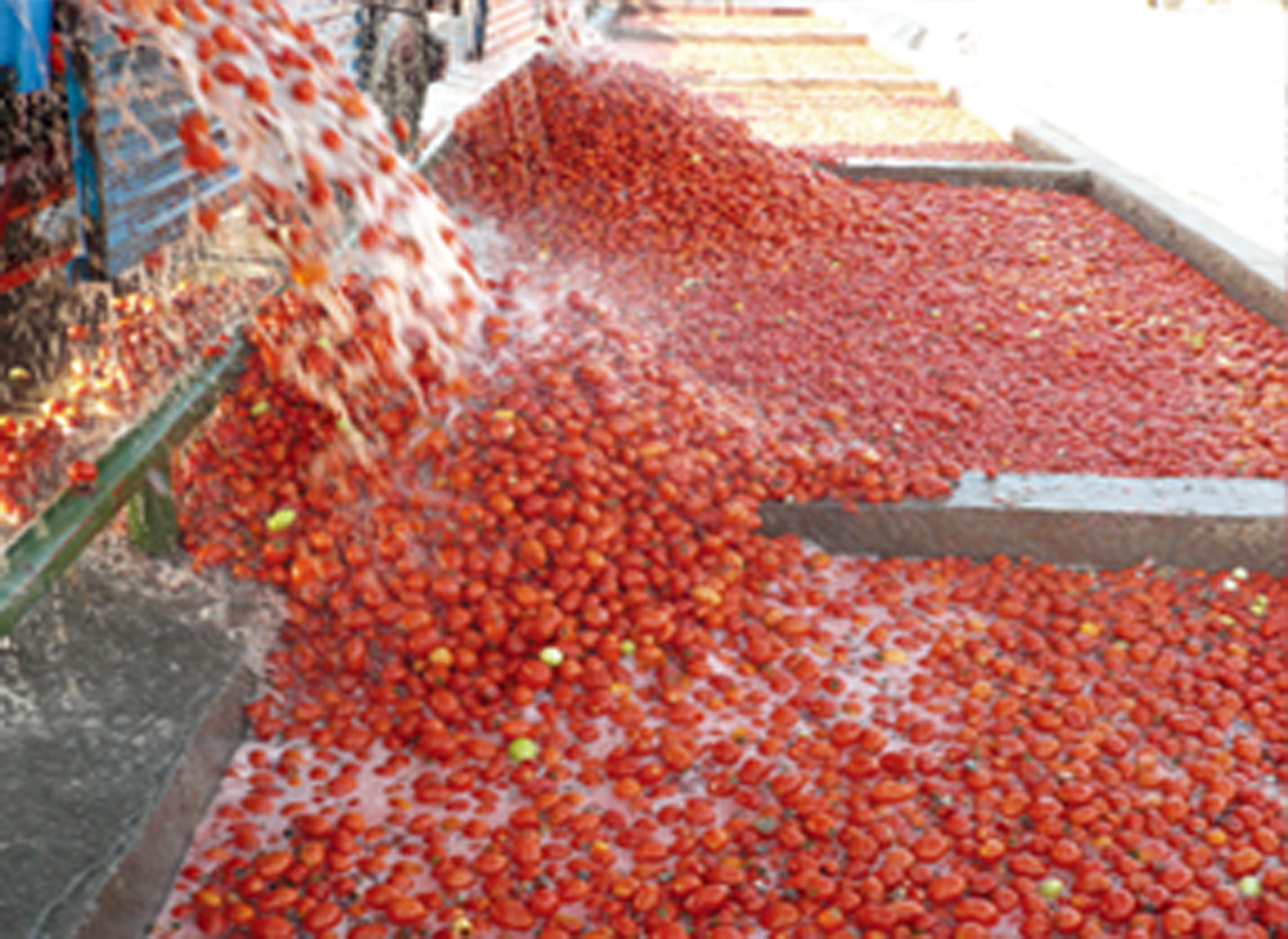 Línea de procesamiento de tomate