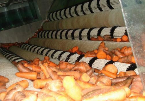Línea de procesamiento de zanahorias