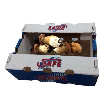 Mushroom Carton