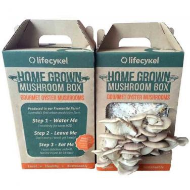 Custom Mushroom Box With Handle