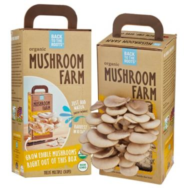 New Design Mushroom Carton