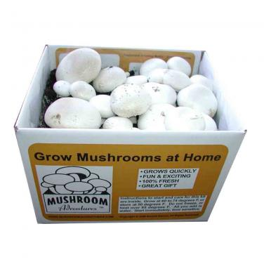 China Supplier Custom Made Mushroom Carton