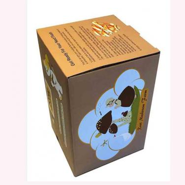 New Design Color Printed Mushroom Box