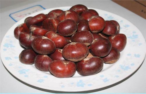 Premium Quality Chestnut