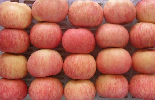 Premium Export Quality Red Fuji Apples