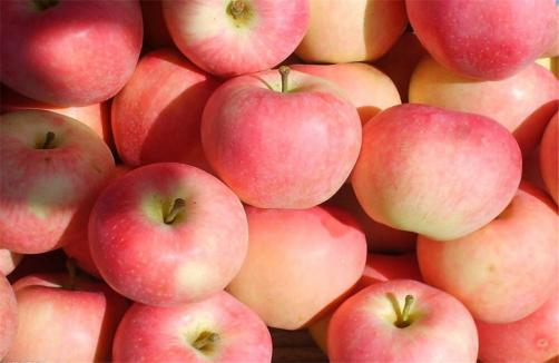 Premium Export Quality Red Gala Apples