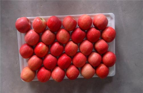Premium Export Quality Pink Lady Apples
