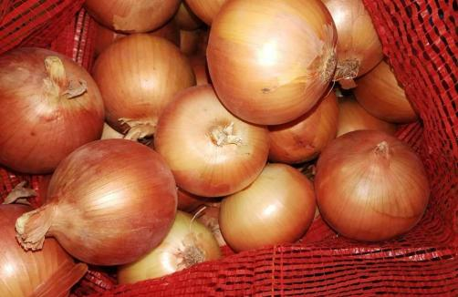 Export Quality Yellow Onion