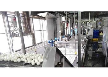 Fish balls and meatballs processing line