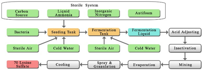 Lysine process technology